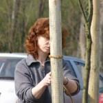 Neue Bäume für Köthen